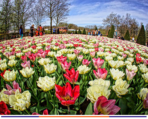 8 วัน เบเนลักซ์ เทศกาลดอกไม้เคอร์เคนฮอฟ