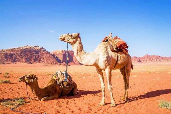 เที่ยวอิยิปต์ จอร์แดน 2 ดินแดนอันยิ่งใหญ่ 8วัน 5คืน โดยสายการบิน อียิปต์ แอร์ (MS)