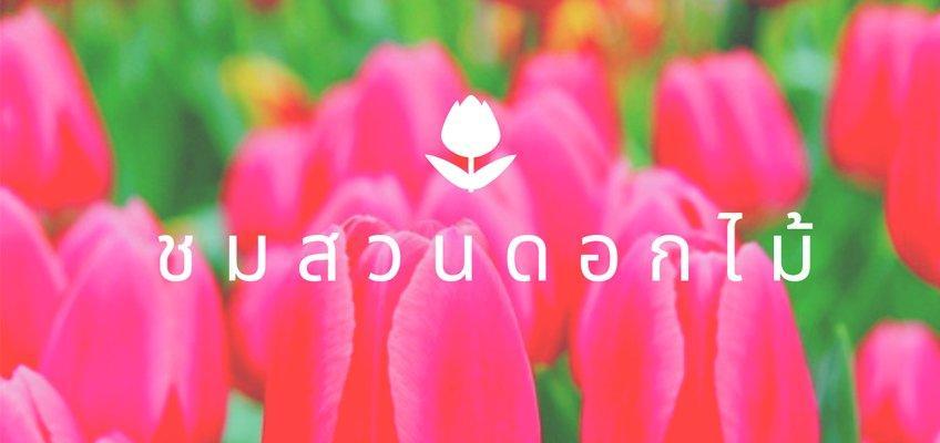 ทัวร์ชมดอกไม้ ดอกทิวลิป ทุ่งลาเวนเดอร์ ดอกพิงค์มอส