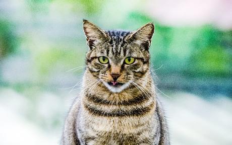 STG4 - ไต้หวันเกินคาด ตามสไตล์ Hipster ทาสแมว 6D4N BY EVA AUG - NOV 19