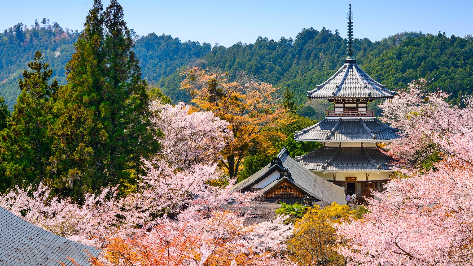 ทัวร์ญี่ปุ่น ซากุระ 2020