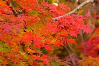 TOKYO SPARKLING มุ้งมิ้ง ใบไม้เปลี่ยนสี 5D3N