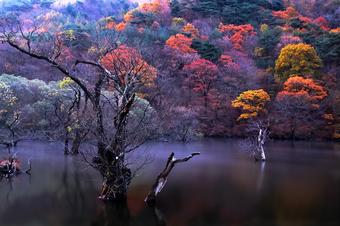 เกาหลี Funny Seoraksan in Autumn 5 วัน 3 คืน