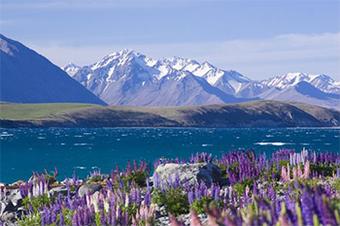ทัวร์นิวซีเเลนด์  Amazing New Zealand Tour