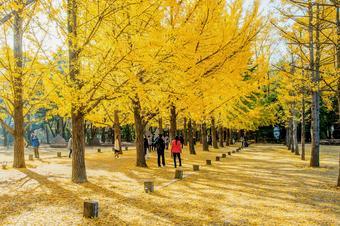 KOREA รักมากมาย ใบไม้เปลี่ยนสี