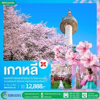 เกาหลี สวนสนุกเอเวอร์แลนด์  5 วัน 3 คืน