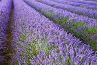 Fairytale Lavender  ตุรกี  10 วัน 7 คืน