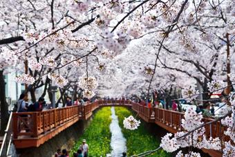 ทัวร์เกาหลี ปูซาน จินเฮ
