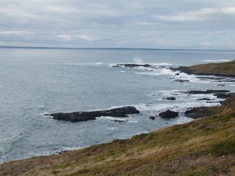 ทัวร์ออสเตรเลีย เมลเบิร์น เกาะฟิลลิป 5D2N By SQ