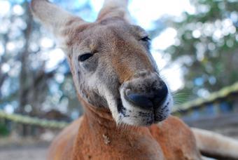 ทัวร์ออสเตรเลีย POPULAR AUSTRALIA 6วัน4คืน By TG