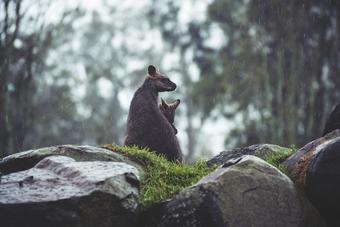 ทัวร์ออสเตรเลีย ซิดนีย์ HIGHLIGHT SYDNEY ซิดนีย์ บลูเมาท์เท่นส์ พอร์ต สตีเฟ่นส์  5วัน3คืน By QF