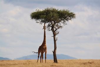 ทัวร์เคนย่า The Great Kenya Safari 8วัน5คืน By ET