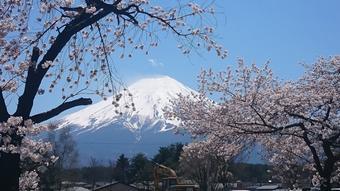 ทัวร์ญี่ปุ่น โตเกียว ฟูจิ Pinkmoss Festival Tokyo Fuji Pinkmoss 4วัน3คืน By XJ