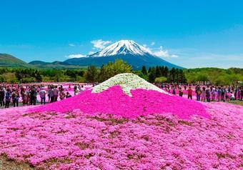 ทัวร์ญี่ปุ่น โตเกียว ฟูจิ Pinkmoss Festival Tokyo Fuji Pinkmoss
