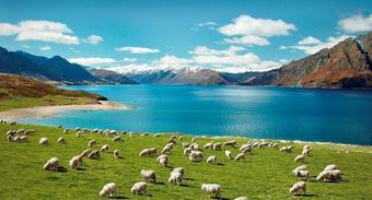 ทัวร์นิวซีแลนด์ PRO NEW ZEALAND NATURAL