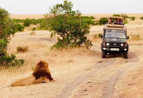 ทัวร์แอฟริกา เคนย่า ซิมบับเว บอตสวานา เซมเบีย