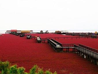 ทัวร์จีน เสิ่นหยาง ข้าวเหนียวแดง หาดแดง 1 ปี มี 1 ครั้ง จี้หลิน ฉางชุน 7 วัน 5 คืน