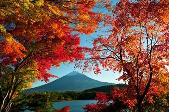ทัวร์ญี่ปุ่น โตเกียว ฟูจิ Red Autumn 5 วัน 3 คืน