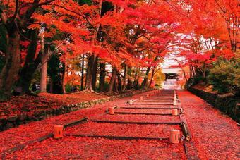 ทัวร์ญี่ปุ่น โตเกียว ฟูจิ Autumn Red Tokyo Fuji  5D3N