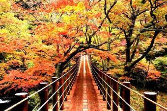ทัวร์ญี่ปุ่น โอซาก้า โตเกียว Autumn & Winter Golden Route 5 วัน